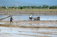 Vinh Long province invites investment in agriculture