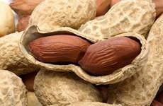 Vietnam suspends peanut imports from Senegal