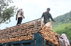 Cassava exports fall with China demand
