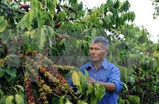 Vietnam, UK seek ways to boost coffee trade