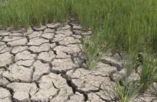 Low water levels threaten Hau Giang's aquatic sector
