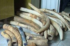 Thailand shows clear stance on ivory trade elimination