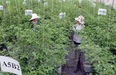 Vietnam-Japan agricultural cooperation to thrive
