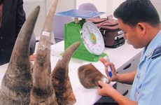 Synthetic rhino horns could not solve poaching problem