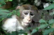 GEF helps Vietnam increase biodiversity preservation