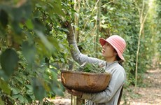 Southeast Asia looks towards sustainable agriculture