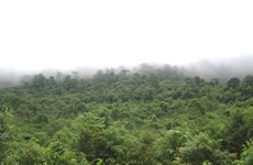 Thua Thien – Hue: 110 billion VND for protective forest development