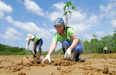 Vietnam's readiness to realise REDD+ evaluated