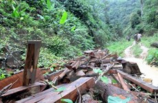 Southern localities review forest protection activities