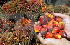 Malaysia, Indonesia reach pact to form palm oil council