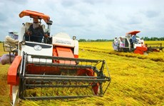 More incentives needed for expanding large-scale fields