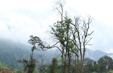 EVN to replant nearly 13,000 hectares of forests