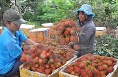 Dong Nai's dried rambutan reaches French market