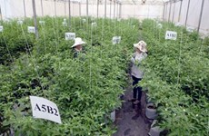 RoK enterprise invests in high-tech agricultural project