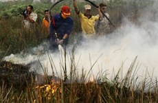 Indonesia works to restore environment after fires