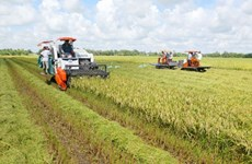Mekong Delta agriculture needs high technology