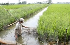 Workshop boosts financial assistance for aquaculture in Mekong Delta