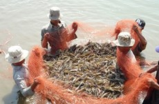 Shrimp farming in Vietnam: the search for sustainability
