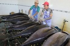 Tuna firms eye 8 percent export rise