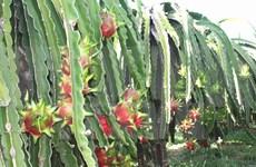 Vietnamese fruit exporters enjoy larger market in 2015