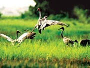 Kien Giang to establish Phu My habitat reserve
