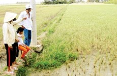 Saline intrusion a threat to crops in Mekong Delta