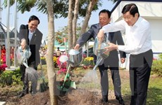 President launches Tree Planting Festival in Tuyen Quang
