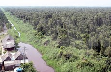 Ca Mau: cajuput forest faces high risk of fires