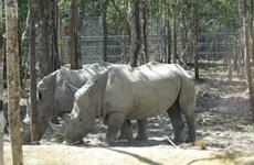 Safari park dismisses claims of endangered species deaths