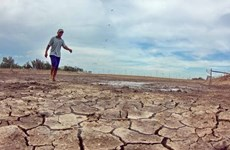 Drought, saline intrusion prevention – urgent task