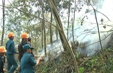 Tay Ninh rolls out drastic solutions to forest fires