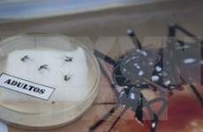 Cao Bang works to protect against Zika virus