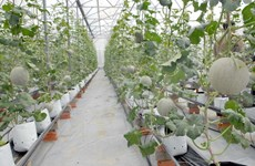 HCM City's agricultural restructuring a success