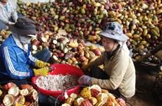 Vietnam's chocolate sector looks to go premium