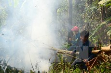 Localities hurt by widespread forest fires