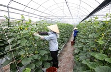 Speedy restructuring needed in agricultural sector
