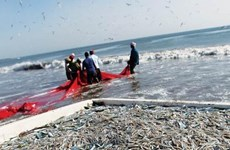 Thailand signs IUU combating agreement with EU, ILO