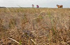 Farmers need support from gov't to tackle drought
