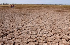 Mekong Delta struggling with drought, salt intrusion