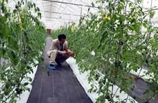 Smart farming a bright future for Vietnam