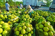 Vietnam's vegetables export value rise