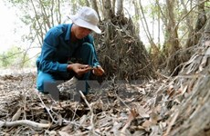 Seawater intrudes Ramsar sites in Mekong Delta