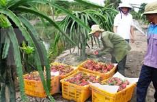 Vietnamese dragon fruit comes back to Taiwan