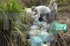 Environment matters to rural areas during development
