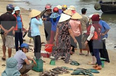 Cause of mass fish deaths probed