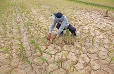 Cambodia intensifies measures to combat drought