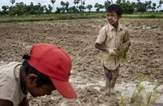 2.5 million Cambodians affected by severe drought