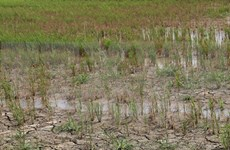 Late rainy season anticipated for 2016: scientists