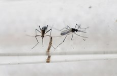 Singapore reports first Zika case