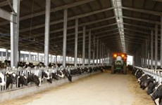 TH Group to launch organic milk products